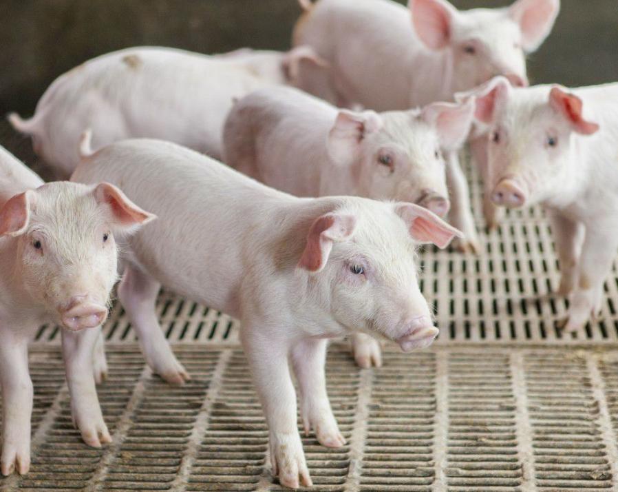 农牧养殖自动配料称重系统-自动化养殖控制