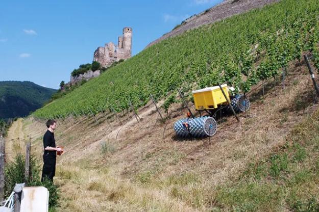 陡坡种植的葡萄栽培机器人Geisi